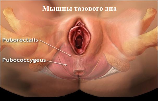 Оргазм  Википедия
