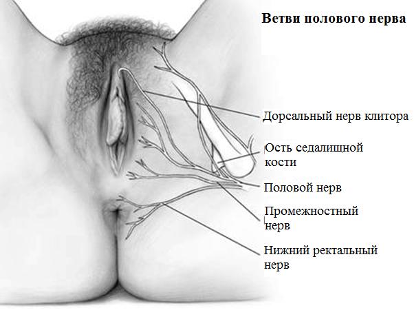 pokalivaniya-vo-vlagalishe-pered-menstruatsiey